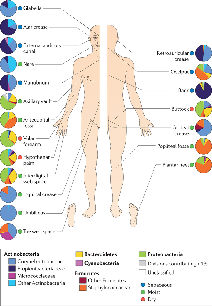 GB | The Human Microbiome - An Overview